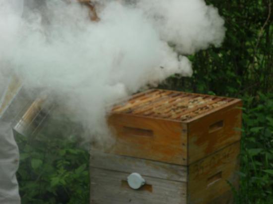 Enfumage des abeilles