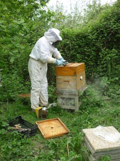 Ouverture d'une ruche