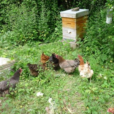Gardiennes des ruches