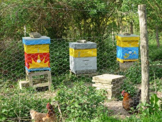Les ruches en couleur