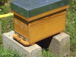 nouvelle ruche
